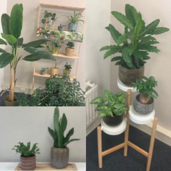 Plantenplan